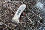 Cinderella's lost shoe